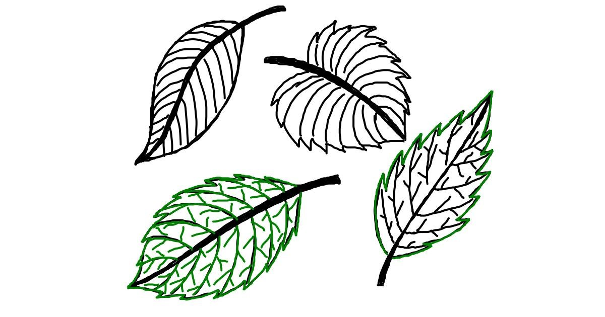 Drawing of Leaf by Ariaria