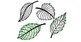Leaf drawing by Ariaria