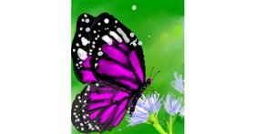 Butterfly drawing by Muni