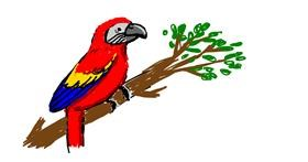 Drawing of Parrot by Chicken 🐓