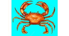 Crab drawing by Cec