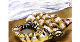 Seashell drawing by Soaring Sunshine