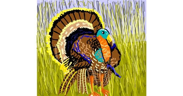 Turkey drawing by Geo-Pebbles