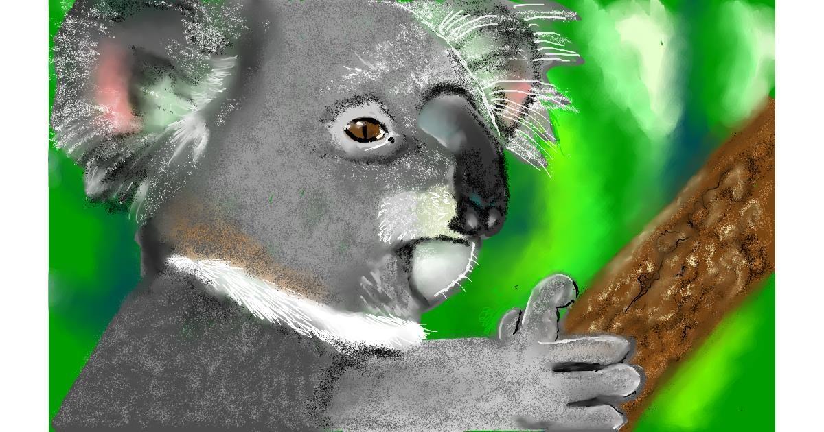 Drawing of Koala by Tim