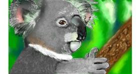 Koala drawing by Tim