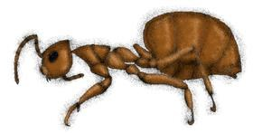 Ant drawing by Stephanie