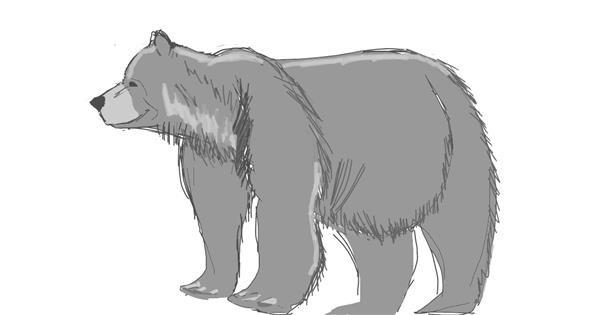 Bear drawing by Vicki