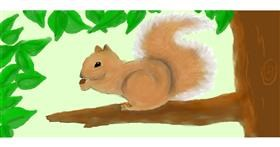 Drawing of Squirrel by Debidolittle