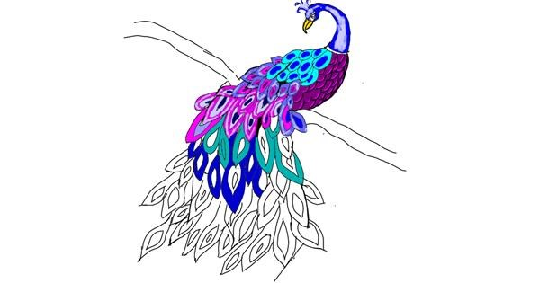 Peacock drawing by Leo🐾