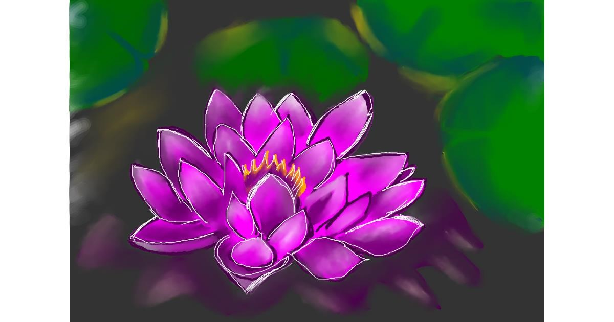 Drawing of Water lily by Rush
