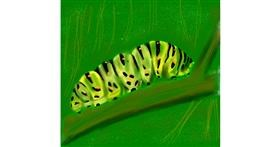 Drawing of Caterpillar by Kathy