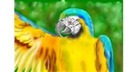 Drawing of Parrot by Wizard
