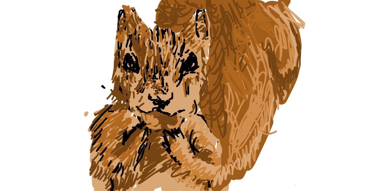 Acorn drawing by Tony