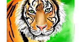Tiger drawing by Rose rocket