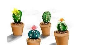 Cactus drawing by Rose rocket