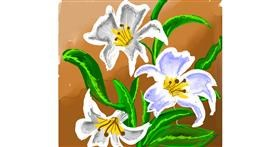 Lily flower drawing by Dream