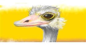 Drawing of Ostrich by Jac