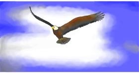Drawing of Eagle by Pinky