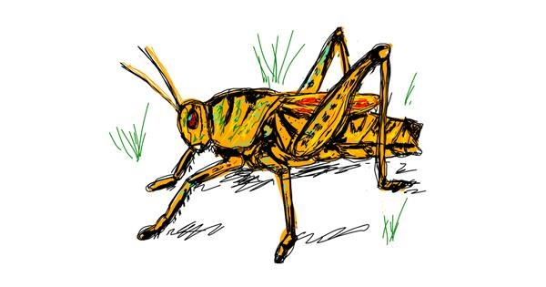Grasshopper drawing by Iris