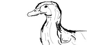 Duck drawing by Flintlock pistol