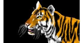 Tiger drawing by SAM AKA MARGARET 🙄