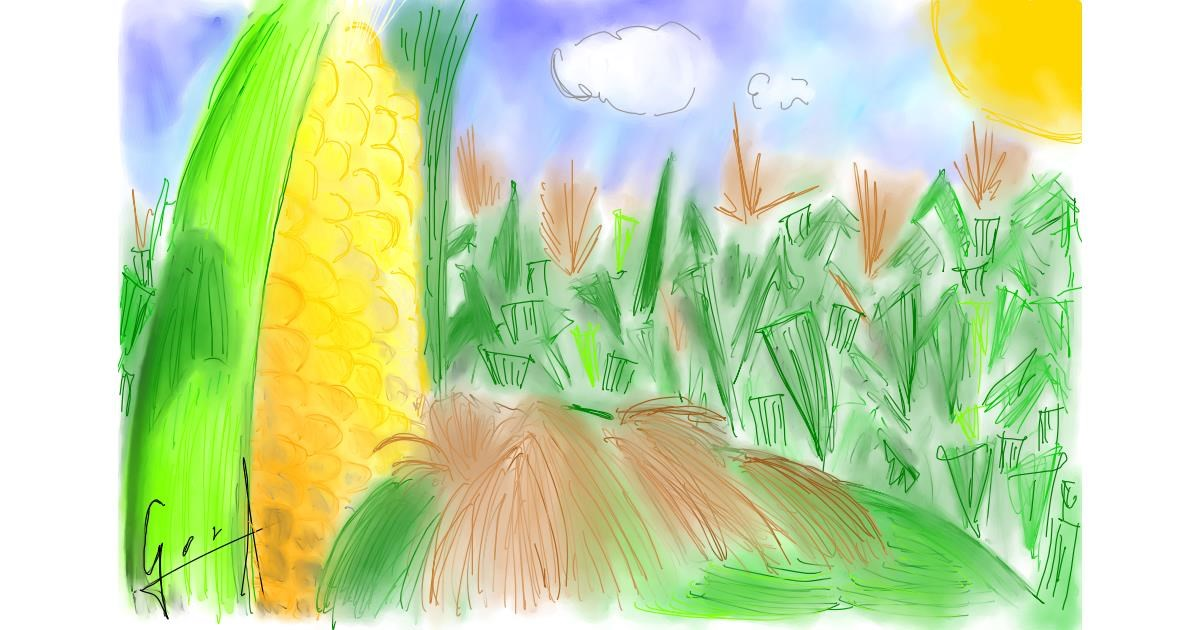 Drawing of Corn by Bibattole