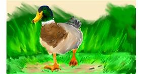 Drawing of Duck by Effulgent Emerald