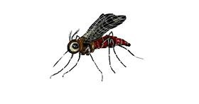 Mosquito drawing by hahah
