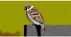 Sparrow drawing by SAM AKA MARGARET 🙄