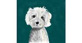 Poodle drawing by JSim