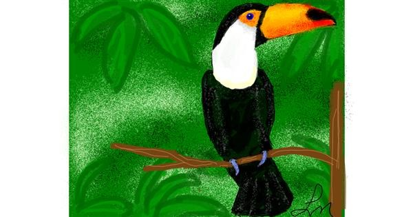 Toucan drawing by Nonuvyrbiznis