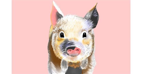 Pig drawing by GJP