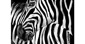 Zebra drawing by Rose rocket