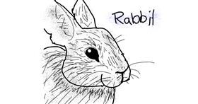 Rabbit drawing by Panda