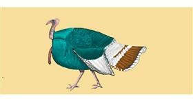 Drawing of Turkey by Pinky