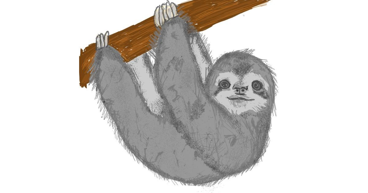 Sloth drawing by Kat