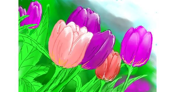 Tulips drawing by Kalina