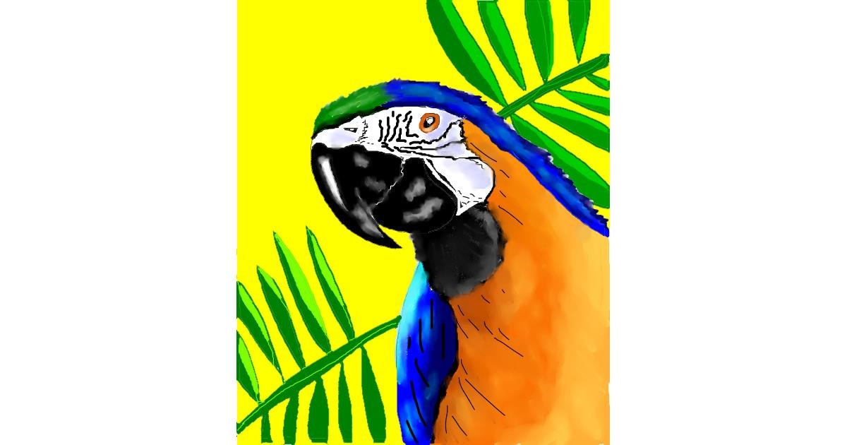 Drawing of Parrot by jule