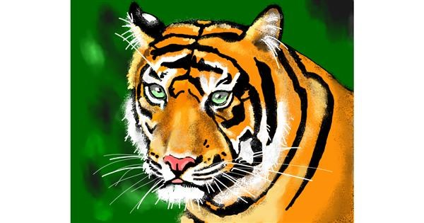 tiger drawing by Cec