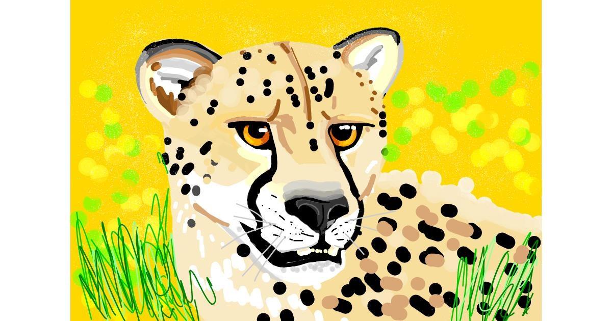 Cheetah drawing by Rain