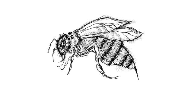 Bee drawing by Cherri