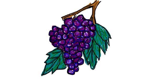 Grapes drawing by Kat