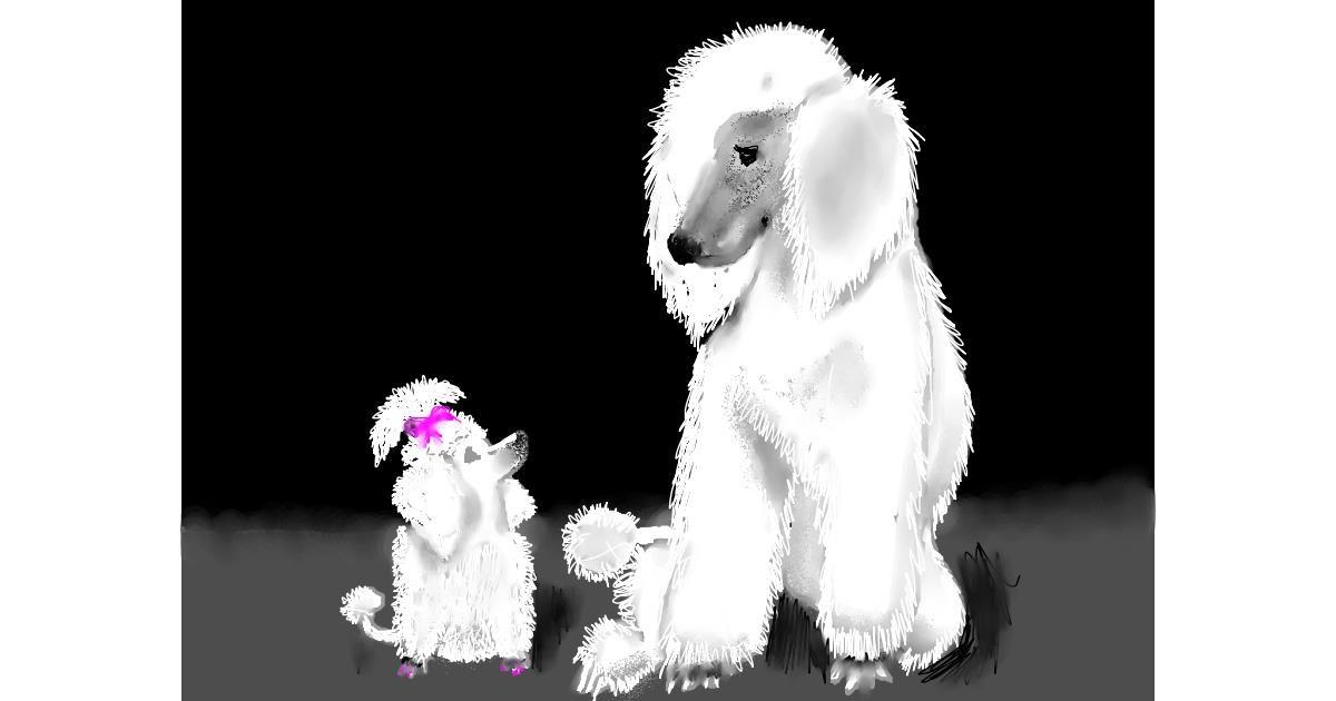 Poodle drawing by SAM AKA MARGARET 🙄