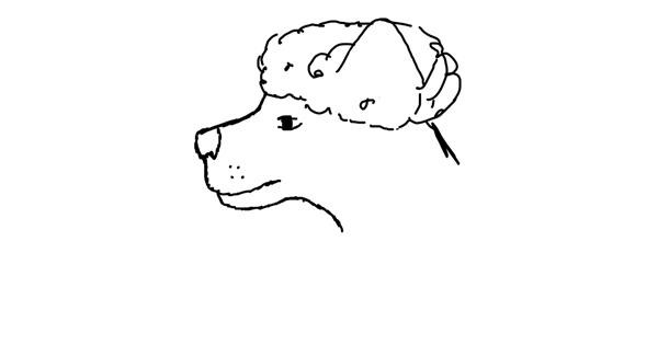 Poodle drawing by Abbey