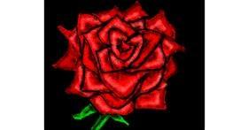 Rose drawing by Cherri