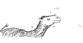 Camel drawing by Kaden L