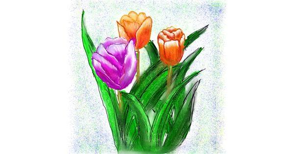 Tulips drawing by Fazila