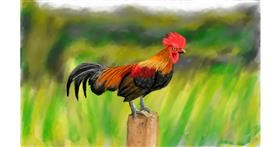 Drawing of Rooster by Humo de copal