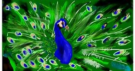 Drawing of Peacock by Effulgent Emerald