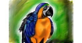 Drawing of Parrot by Jan